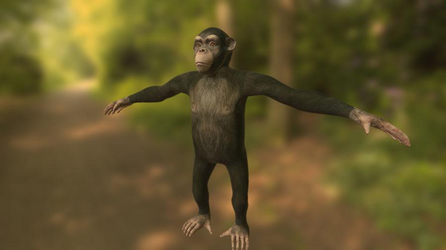 Chimpanzee royalty-free 3d model - Preview no. 2