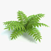 Cartoon Fern 3d model