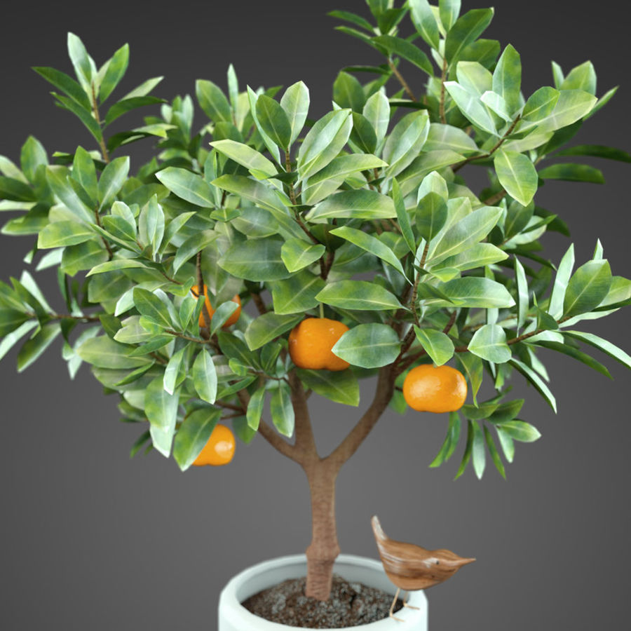 Home Plant Orange tree royalty-free 3d model - Preview no. 1