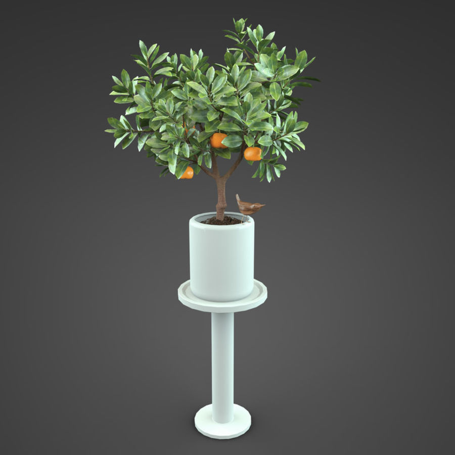 Home Plant Orange tree royalty-free 3d model - Preview no. 2