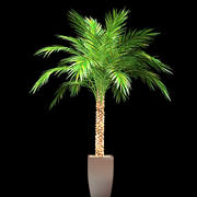phoenix palm in pot 3d model