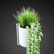 家庭植物4 3d model