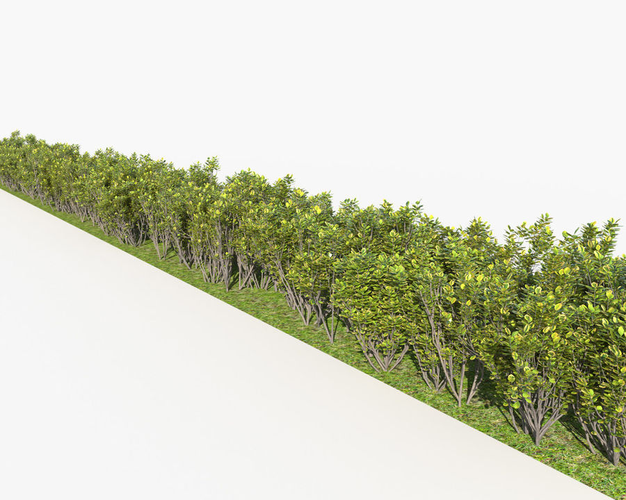 Multiscatter Bushes royalty-free 3d model - Preview no. 8