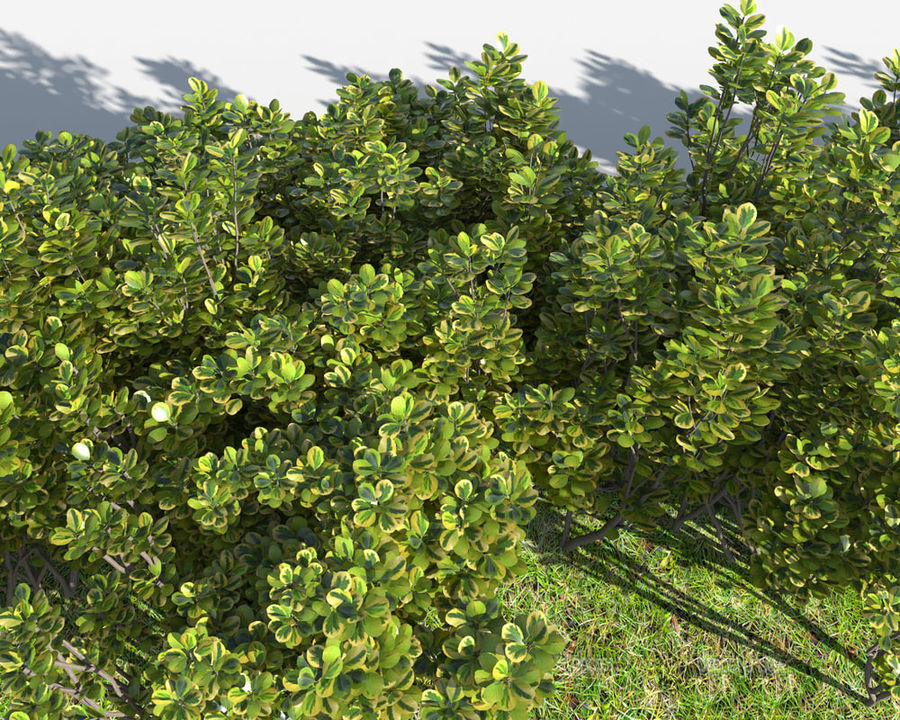 Multiscatter Bushes royalty-free 3d model - Preview no. 5
