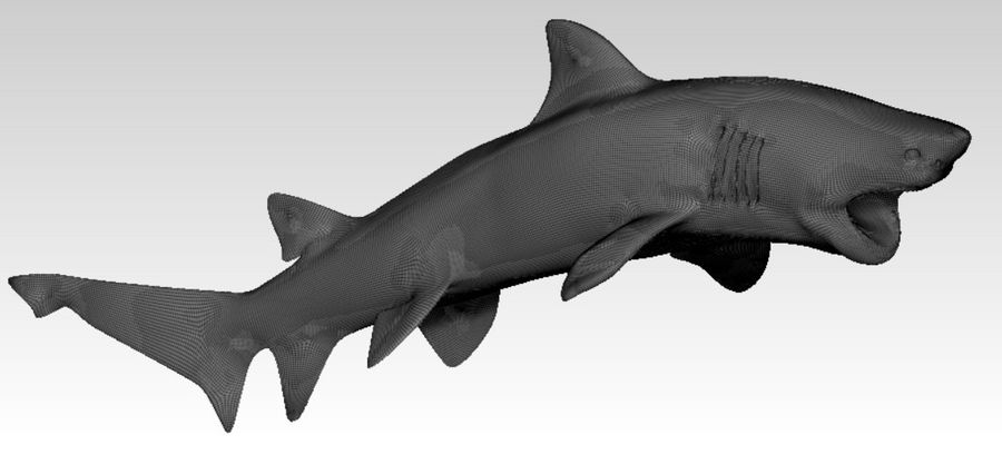 Shark royalty-free 3d model - Preview no. 2