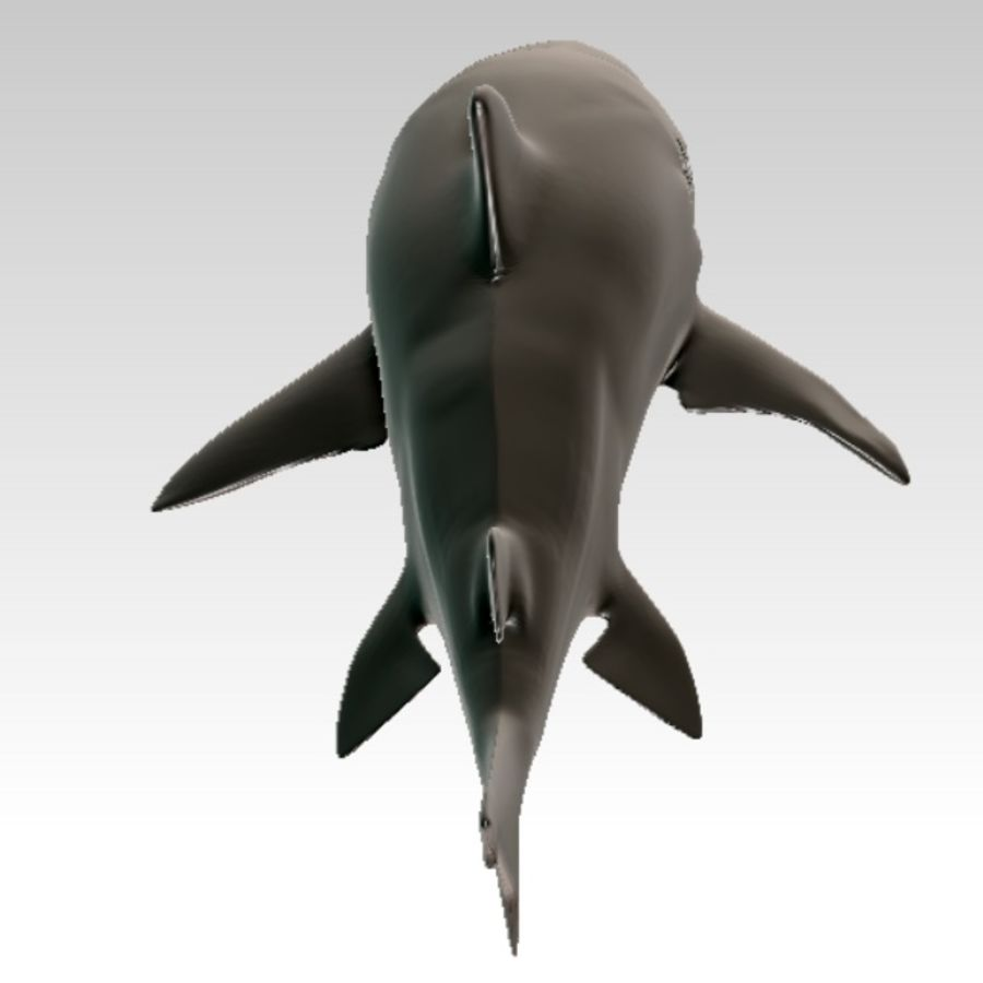 Shark royalty-free 3d model - Preview no. 3