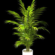 areca palm 160 cm. 3d model