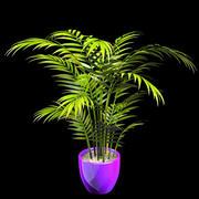 areca palm 1 3d model