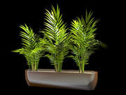 areca palm 3 set 3d model