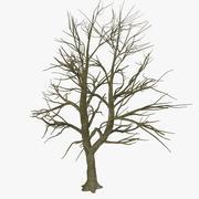 Голое безлистное осеннее дерево 3d model