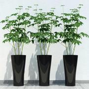 room plant 10 3d model