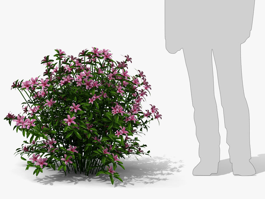 Azalea Moness (333) royalty-free 3d model - Preview no. 7