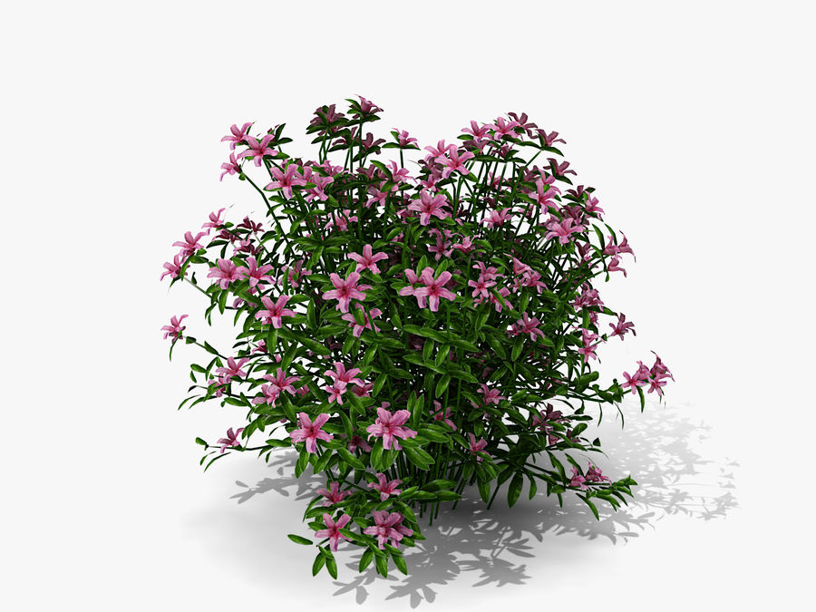 Azalea Moness (333) royalty-free 3d model - Preview no. 5