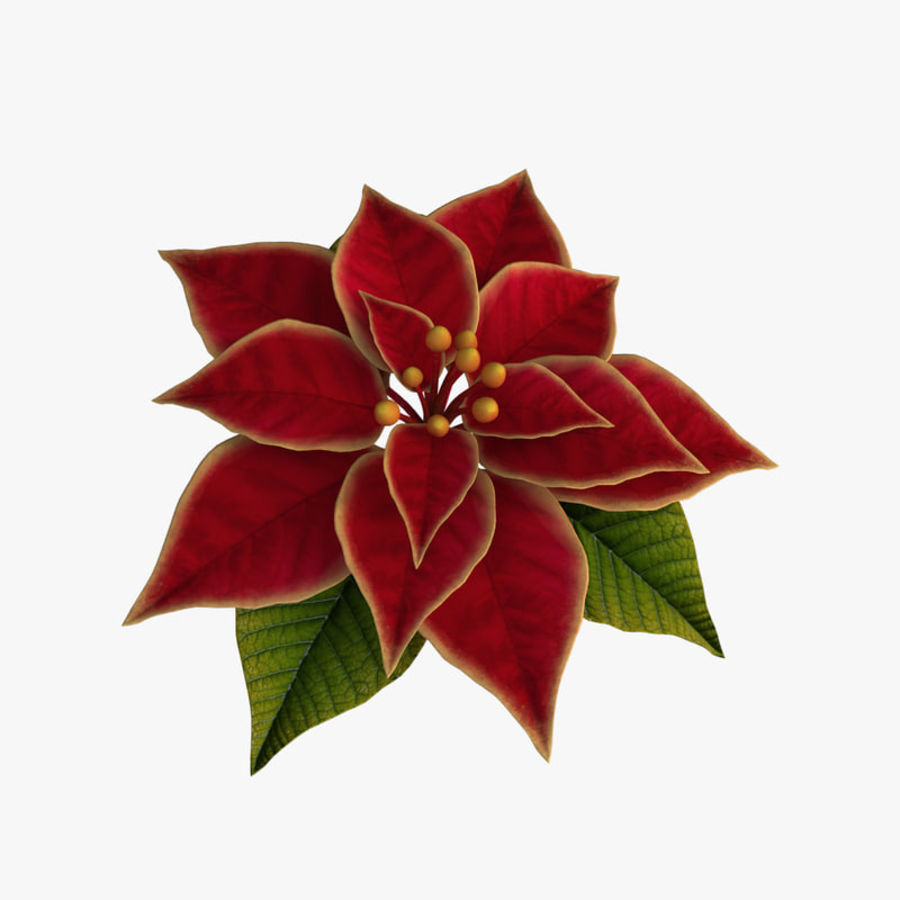 christmas flower royalty-free 3d model - Preview no. 4