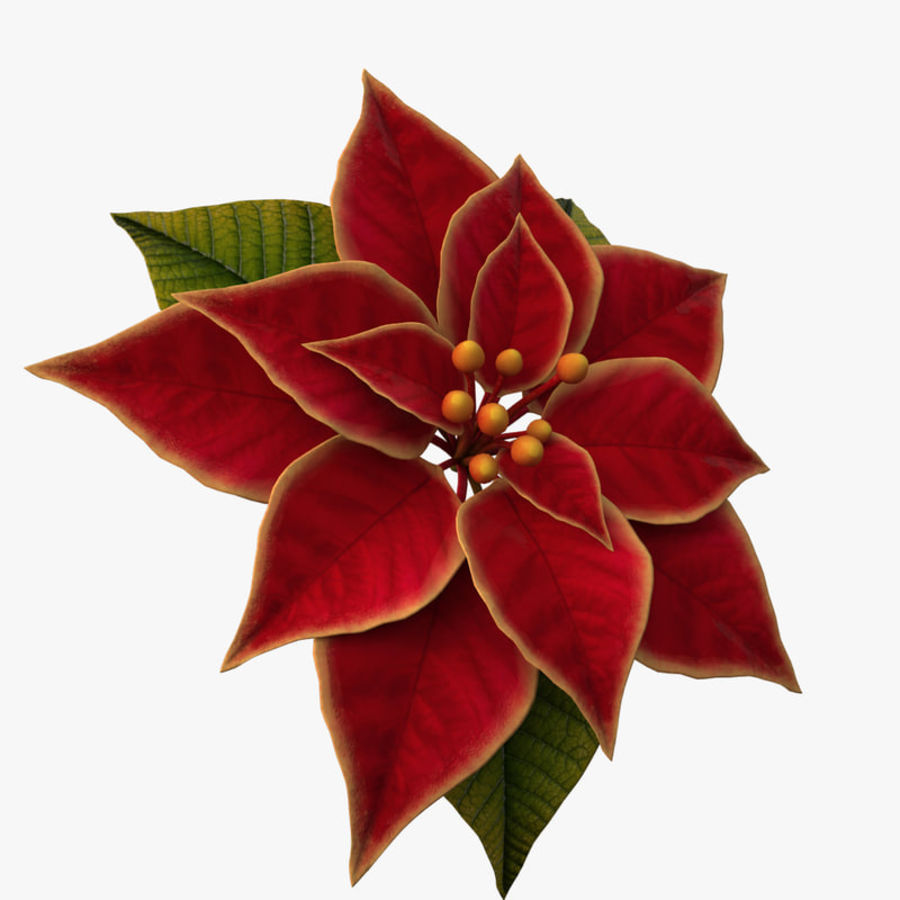 christmas flower royalty-free 3d model - Preview no. 2