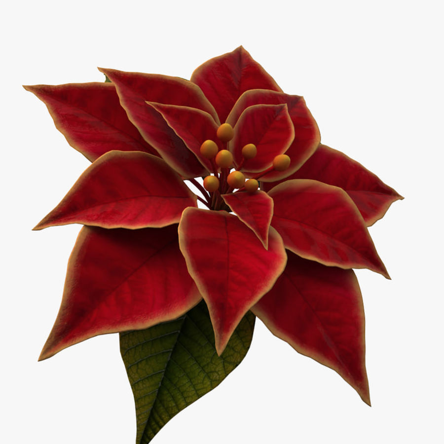 christmas flower royalty-free 3d model - Preview no. 3