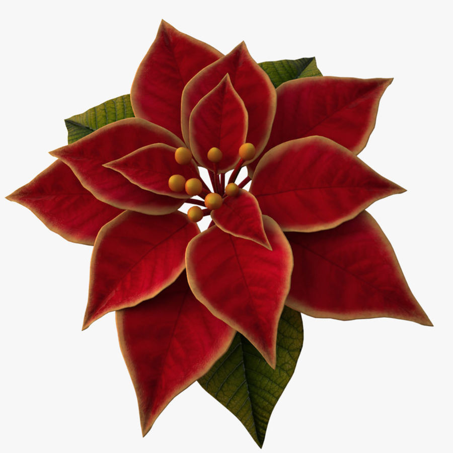christmas flower royalty-free 3d model - Preview no. 1