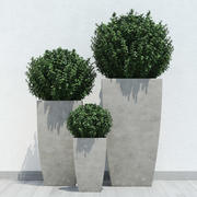 plants 13 3d model