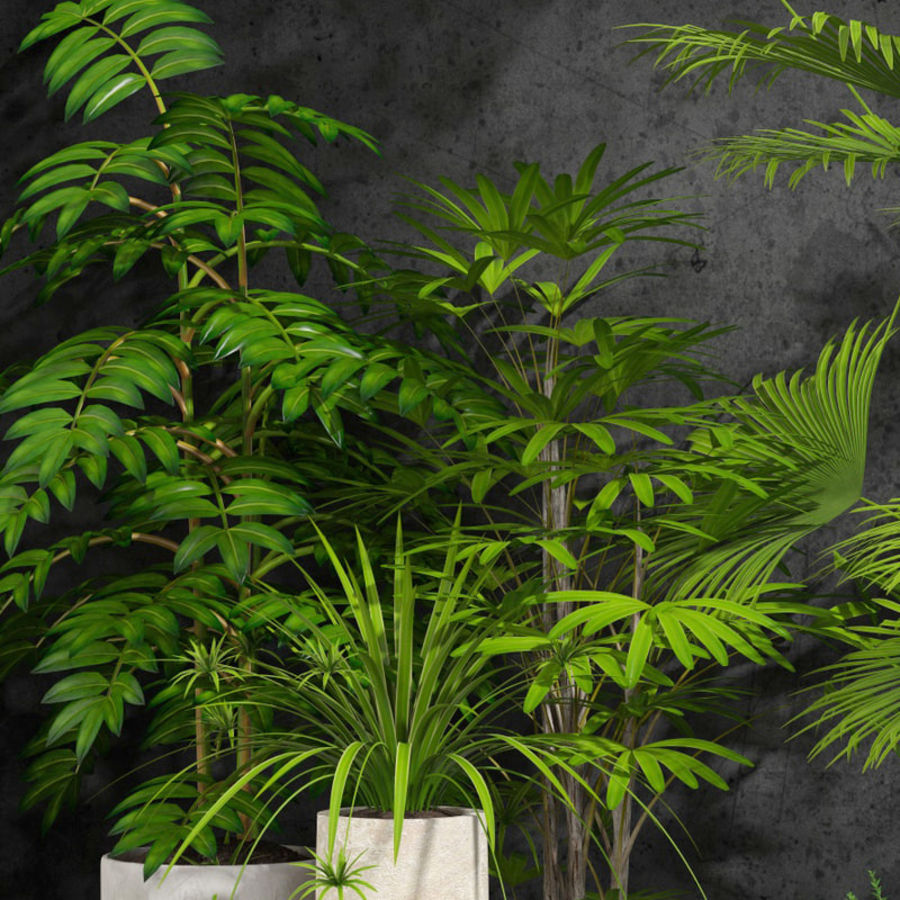 room plants royalty-free 3d model - Preview no. 2