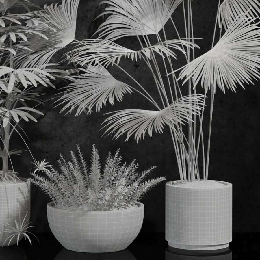 plantes d'intérieur royalty-free 3d model - Preview no. 6