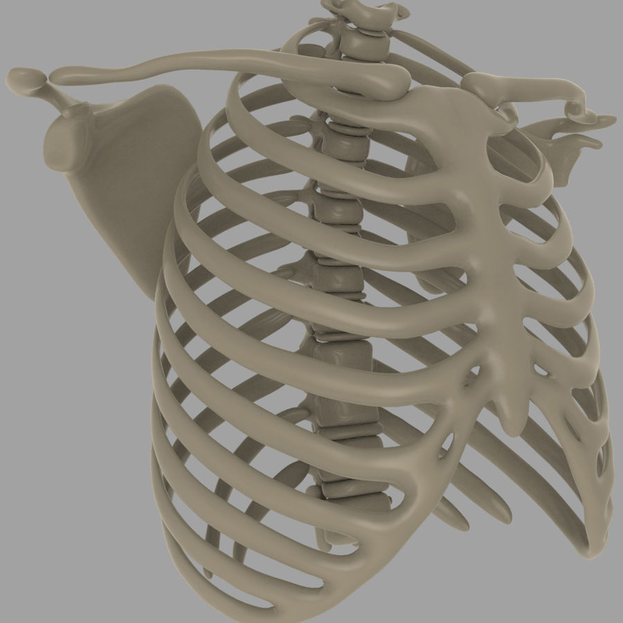 Chest Diagram royalty-free 3d model - Preview no. 2