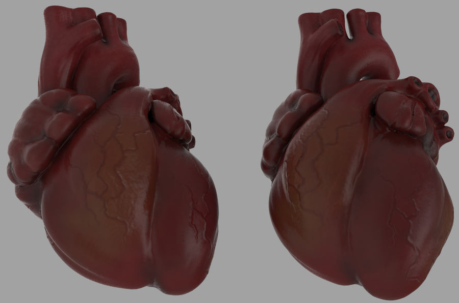 Chest Diagram royalty-free 3d model - Preview no. 3