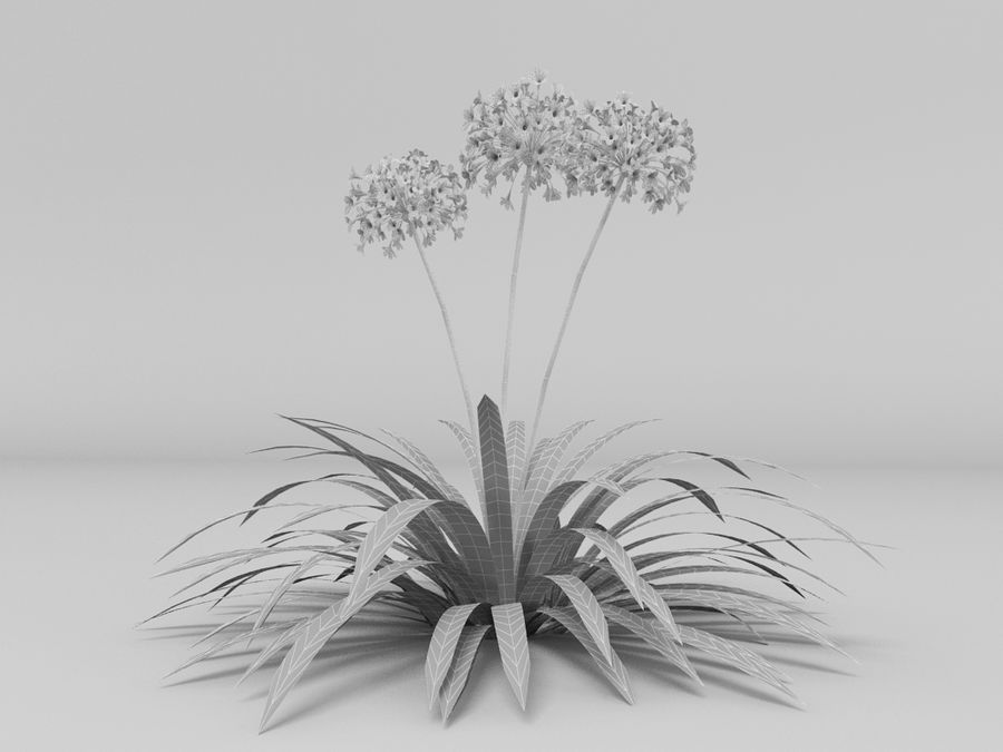 AGAPANTHUS AFRICANUS royalty-free 3d model - Preview no. 4