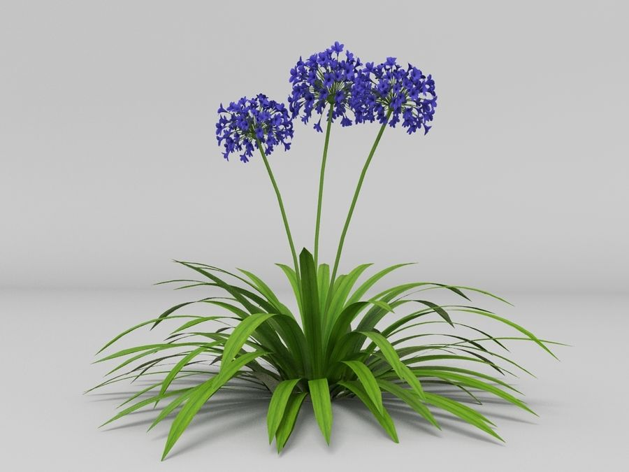 AGAPANTHUS AFRICANUS royalty-free 3d model - Preview no. 3