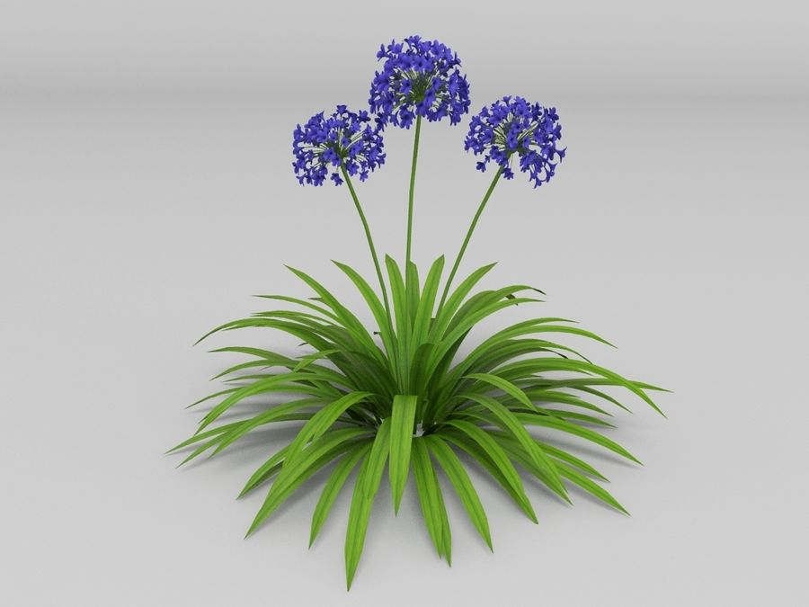 AGAPANTHUS AFRICANUS royalty-free 3d model - Preview no. 1