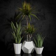 room plants 03 3d model