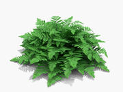 Crested Lady Fern (215) 3d model
