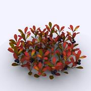 Bearberry 3d model