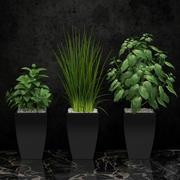 Комнатное растение 08 3d model