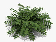 Japanese Holly Fern (220) 3d model