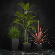 room plants 06 3d model