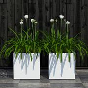plant 15 3d model