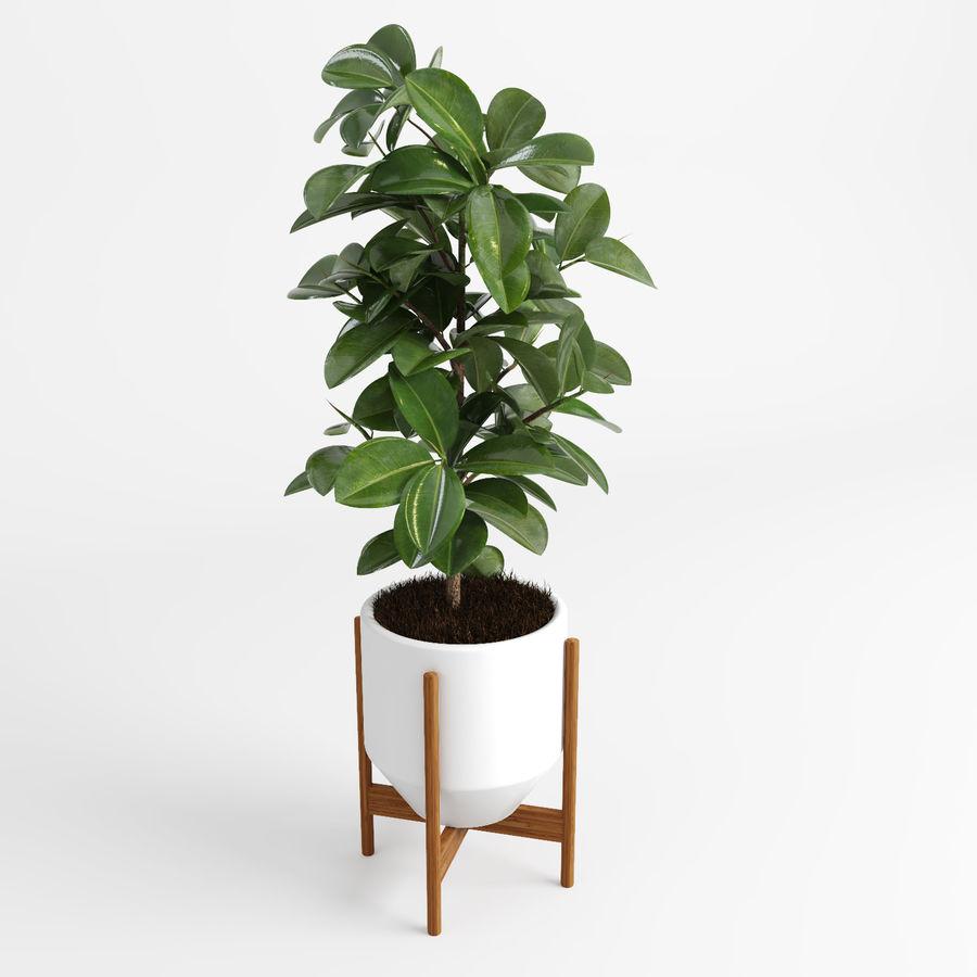 Árvores Ficus royalty-free 3d model - Preview no. 2