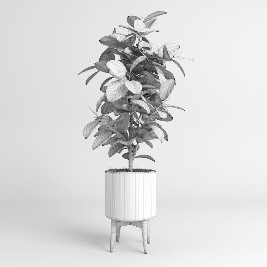 Árvores Ficus royalty-free 3d model - Preview no. 14