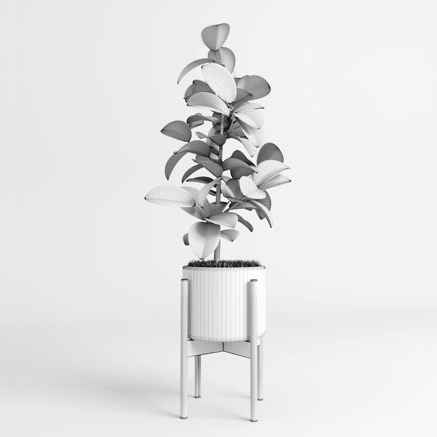 Árvores Ficus royalty-free 3d model - Preview no. 16