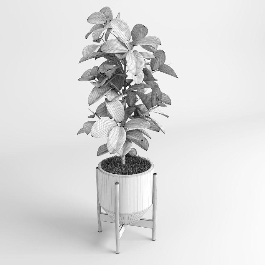 Árvores Ficus royalty-free 3d model - Preview no. 11