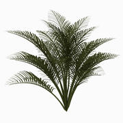 Ground Palm 3d model