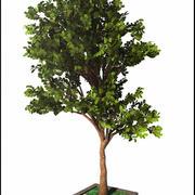 Pełne drzewo 3d model