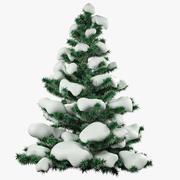 Snow fir V4 3d model