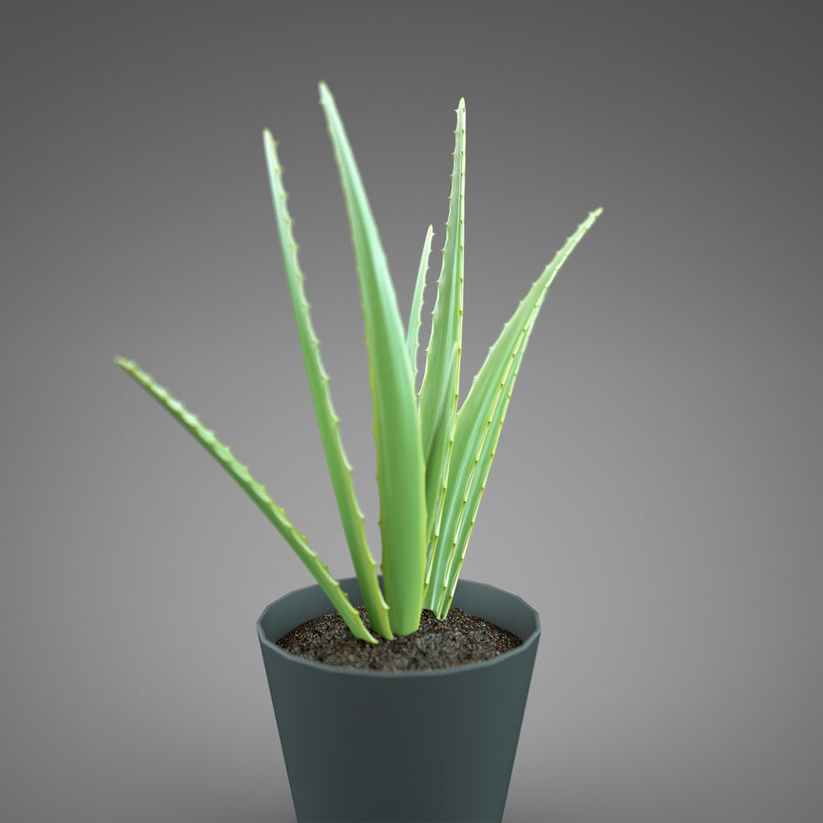 Set Home Plant royalty-free 3d model - Preview no. 16