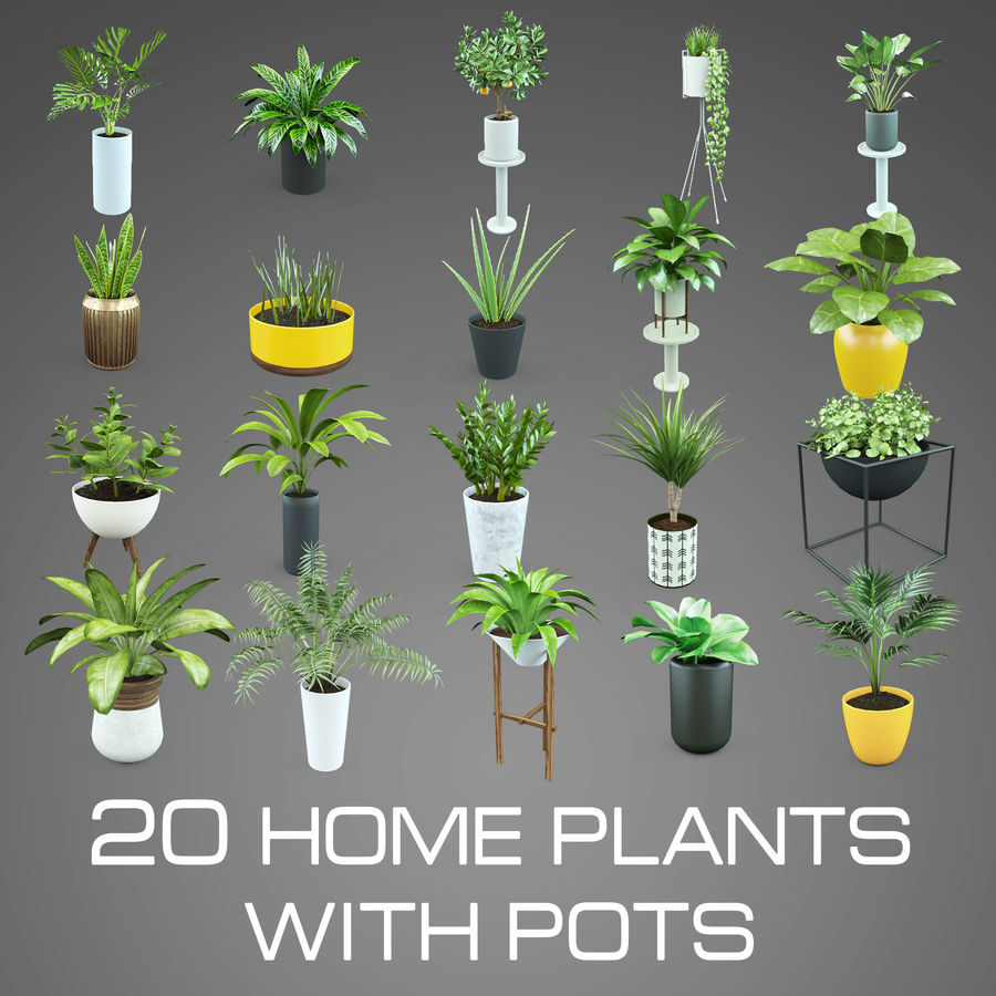 Set Home Plant royalty-free 3d model - Preview no. 1