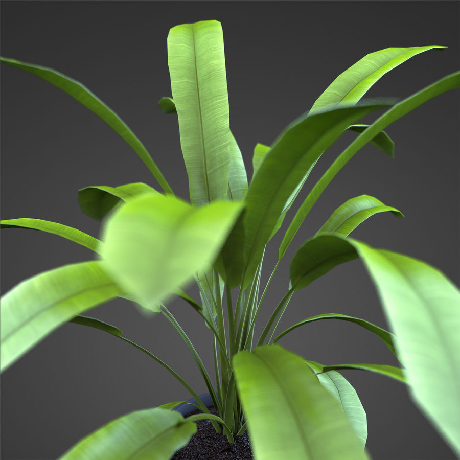 Set Home Plant royalty-free 3d model - Preview no. 24