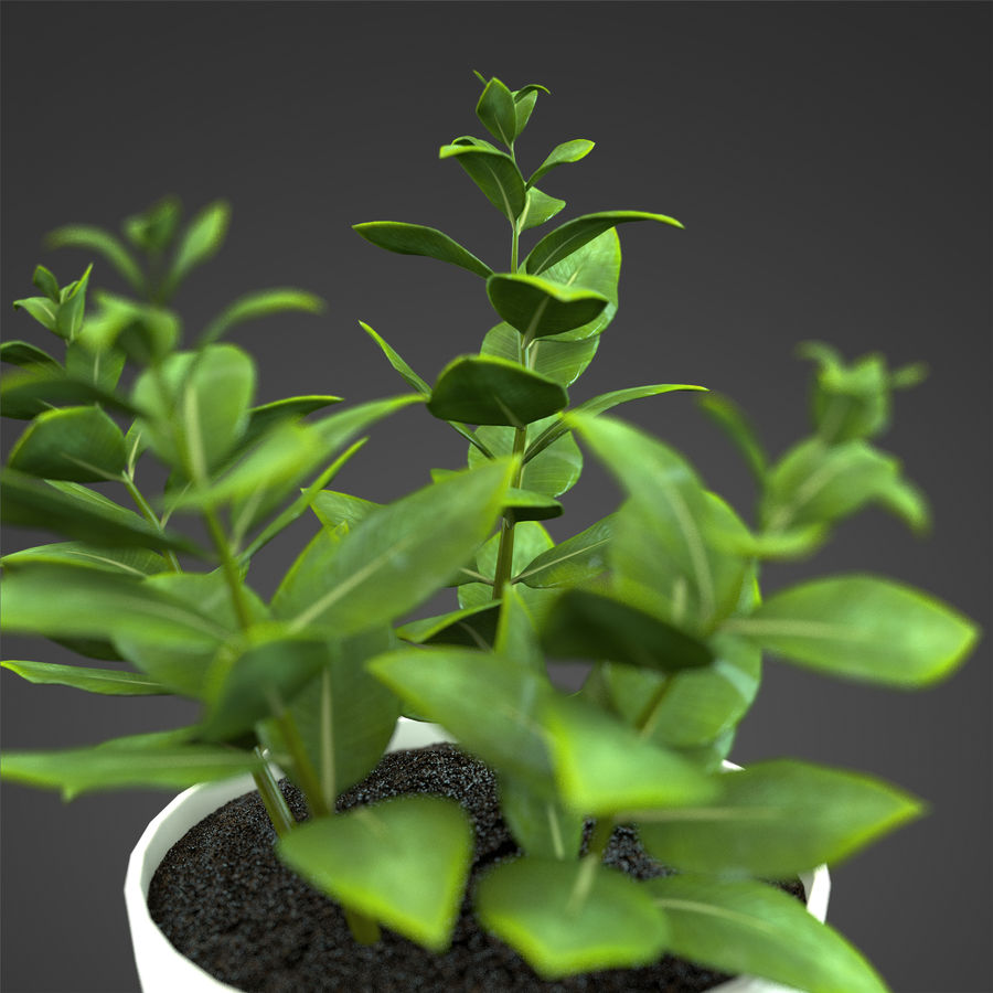 Set Home Plant royalty-free 3d model - Preview no. 22