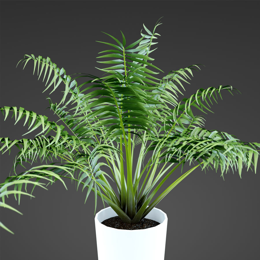 Set Home Plant royalty-free 3d model - Preview no. 34