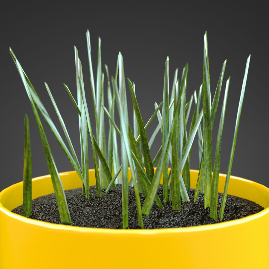 Set Home Plant royalty-free 3d model - Preview no. 14