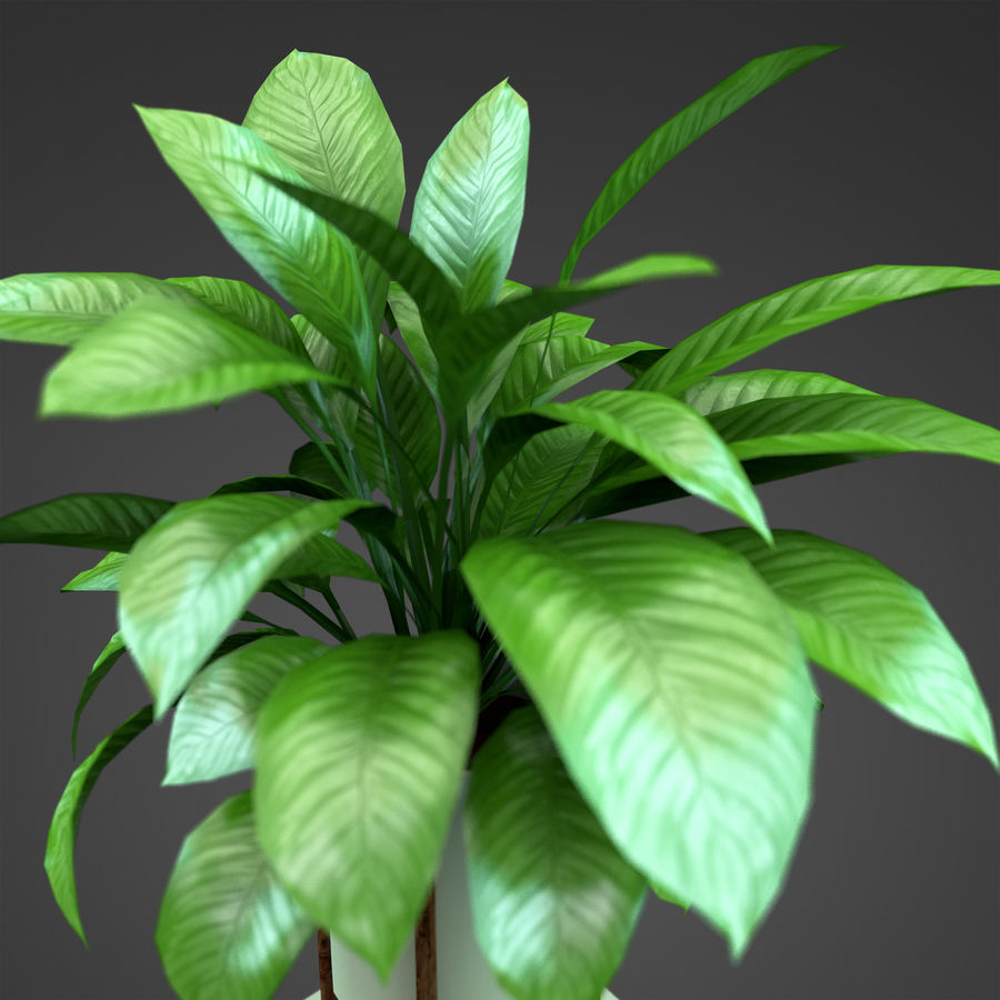 Set Home Plant royalty-free 3d model - Preview no. 18